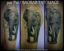 Pat10_tous_droits_réservés_Baobab_Tatouage