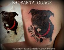 Pat49_tous_droits_réservés_Baobab_Tatouage